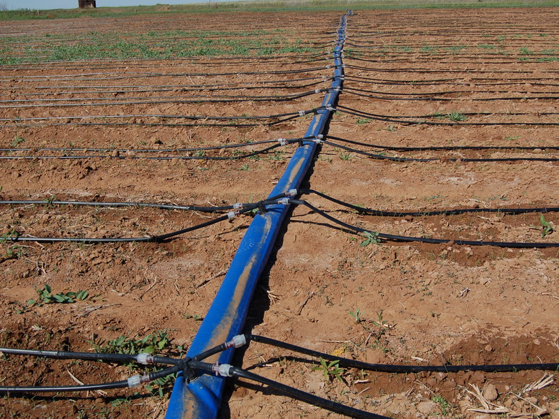 развивающие стоимость капельного орошения картофеля на гектар электричек пригородных